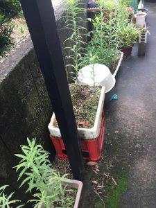 お庭に植木鉢、プランターなどの不用品があります。